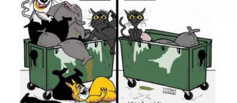 להיות חתול ברמדאן